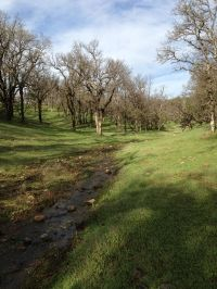 Home for sale: 21675 Charolais Way, Palo Cedro, CA 96073