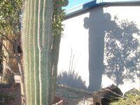 Home for sale: 5875 S. Colin, Tucson, AZ 85706
