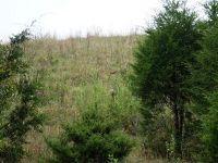 Home for sale: Lot 2 Roaring Fork Rd., Greeneville, TN 37745