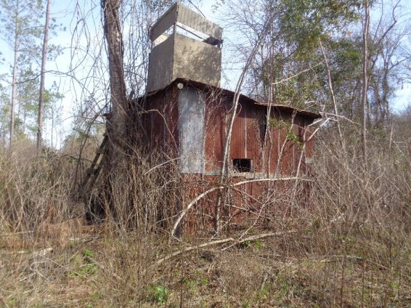 275+/-Ac Cty Rd. 46/Cty Rd 97, Abbeville, AL 36310 Photo 49