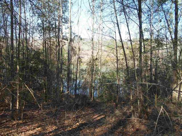 16.9 Acres Private Rd. 1363, Ariton, AL 36311 Photo 15