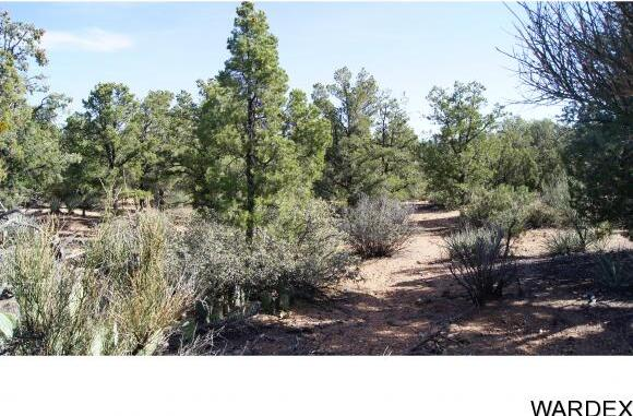 6731 N. Trap Springs Rd., Hackberry, AZ 86411 Photo 36