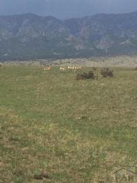 Home for sale: Lot 54 Colorado Buffalo Ranch, Walsenburg, CO 81089