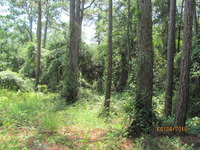 Home for sale: 0 Scenic Hwy. 98, Fairhope, AL 36564