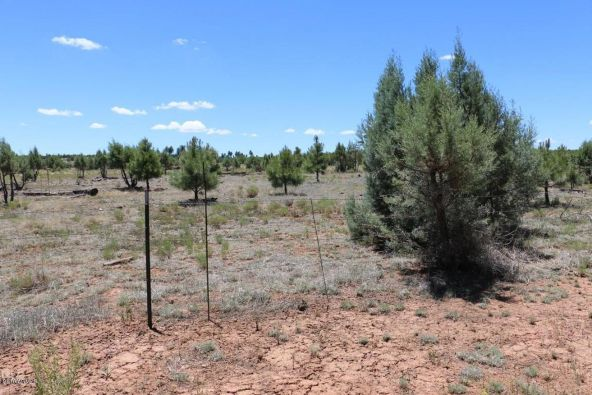 2664 Lodge Loop, Overgaard, AZ 85933 Photo 9