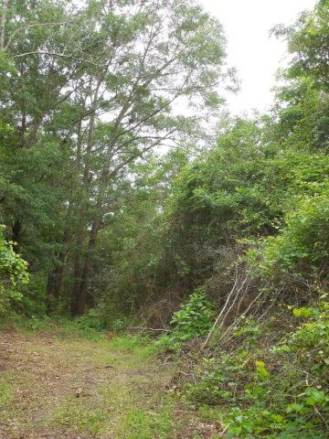 7.8acres Hardy Rd., Rehobeth, AL 36301 Photo 5