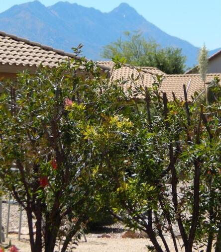 2314 E. Bonita Canyon Dr., Green Valley, AZ 85614 Photo 29