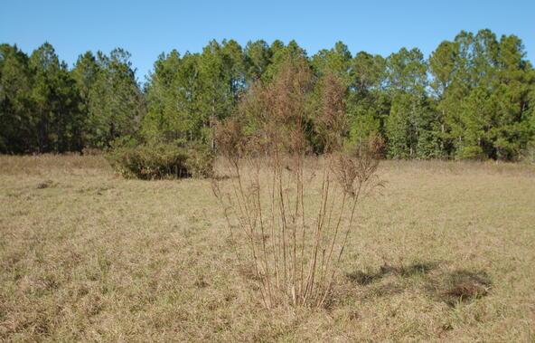 Greengrove Bv, Lot 12, Clermont, FL 34711 Photo 11