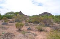 Home for sale: 2905 W. Drexel, Tucson, AZ 85746