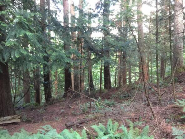 1 Thunder Peak Way, Bellingham, WA 98229 Photo 4