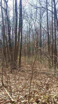 Home for sale: Lot Coal Hill Rd., Stewartstown, PA 17363