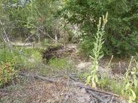 Home for sale: N./A Sheafman Creek Rd., Hamilton, MT 59840
