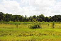 Home for sale: Lot 5 Meadow Ln., Fitzgerald, GA 31750