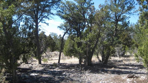 2955 Lodgepole Rd., Overgaard, AZ 85933 Photo 24