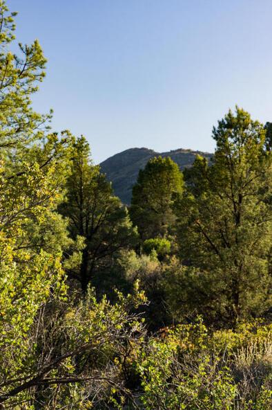 17955 W. Buckhorn Dr., Peeples Valley, AZ 86332 Photo 43