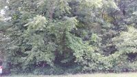 Home for sale: Lot 18 Hickory Ct., Hampshire, IL 60140