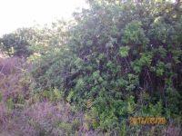 Home for sale: Kaulua St., Naalehu, HI 96772