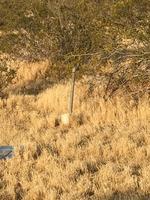 Home for sale: 0 Desert Star Rd., Apple Valley, CA 92308