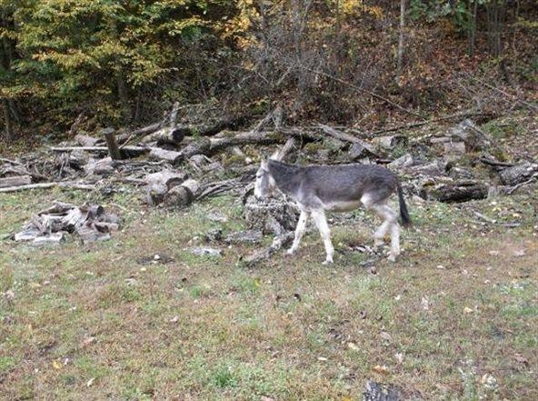 48 Left Fork Shockey Fork Rd., Campton, KY 41301 Photo 16