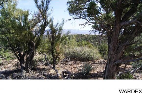 9999 N. Trap Springs Rd., Hackberry, AZ 86411 Photo 15