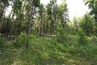 Home for sale: Lot 8 Mountain Dr., Plains, MT 59859