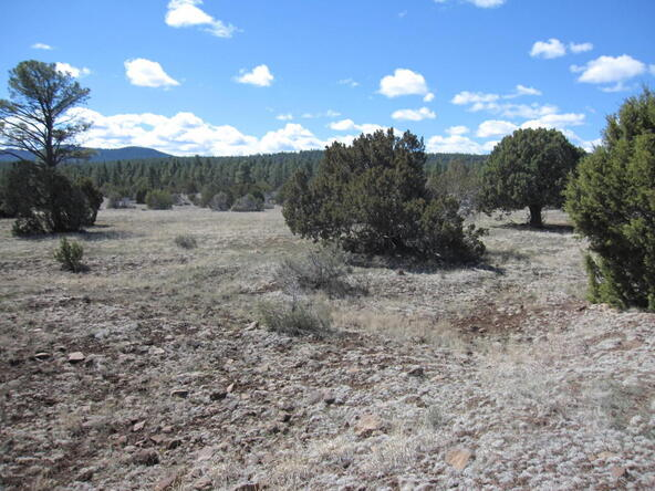 40.88 Acre Of 106-36-034-I, Vernon, AZ 85940 Photo 8