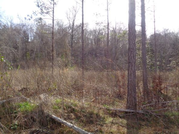 275+/-Ac Cty Rd. 46/Cty Rd 97, Abbeville, AL 36310 Photo 32
