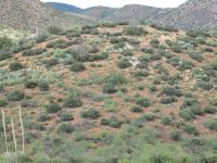 Home for sale: Lot 143 Over Hill Rd. 143, Globe, AZ 85502