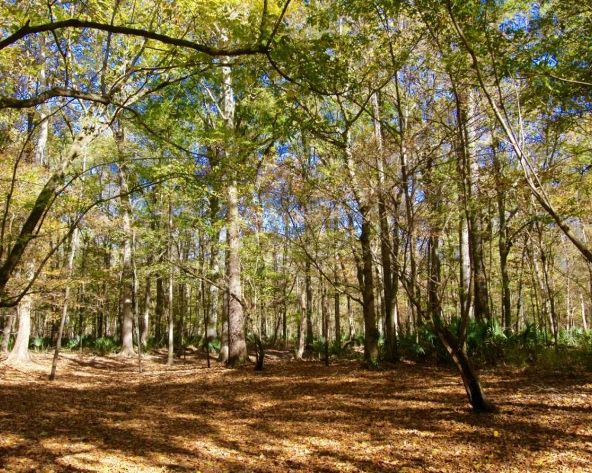4417 Hobbie Rd., Montgomery, AL 36105 Photo 14