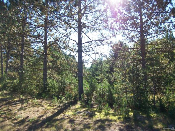 Next To 1781w Hwy. 51, Mercer, WI 54547 Photo 5