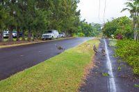 Home for sale: Hamanamana St., Kailua-Kona, HI 96740