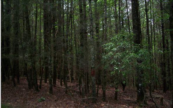 104 Red Oak Rd., Suches, GA 30572 Photo 12