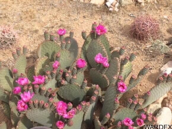 21570 S. John Wayne Rd., Yucca, AZ 86438 Photo 31