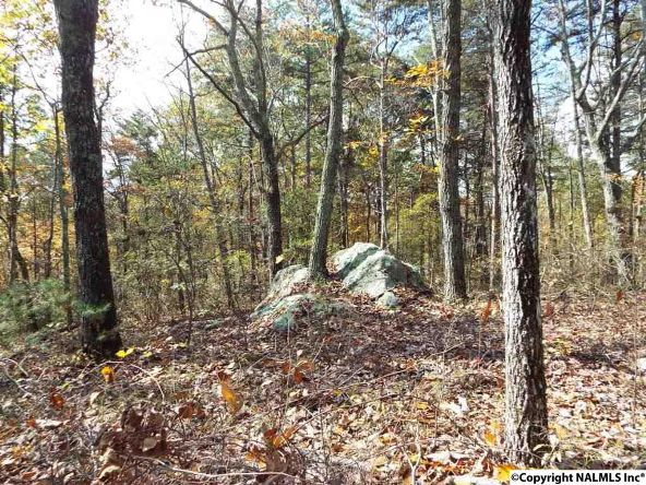 195 County Rd. 844, Mentone, AL 35984 Photo 10