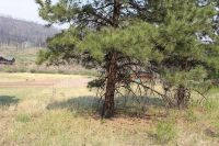 Home for sale: Lot 7 Greer Mountain Subdivision, Greer, AZ 85927