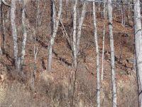 Home for sale: 9999 Metcalf Creek Loop, Mars Hill, NC 28754