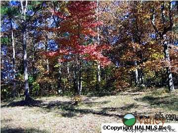 3 County Rd. 935, Mentone, AL 35984 Photo 4