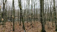 Home for sale: Lot 2 Crystal Point Rd., Birchwood, WI 54817