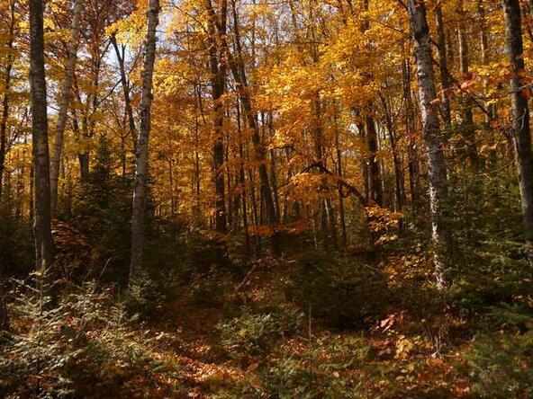 13090-6 Hwy. 139, Long Lake, WI 54542 Photo 13