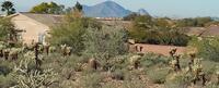 Home for sale: 13145 E. Summit - Lot 55 Dr., Scottsdale, AZ 85259