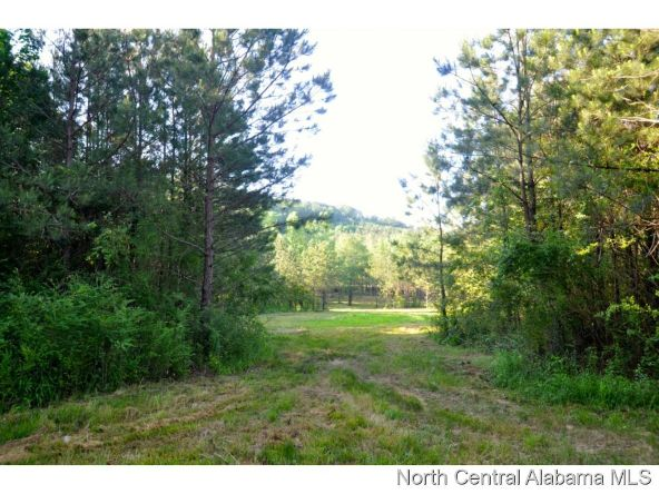 911 Co Rd. 1169, Cullman, AL 35057 Photo 6