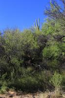 Home for sale: 2145 Jack Burden Rd., Wickenburg, AZ 85390