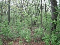 Home for sale: Lot 27 Lakeview Dr., Montello, WI 53949