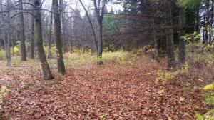 27.55 Acre State Hwy. 32, Sheboygan Falls, WI 53085 Photo 18