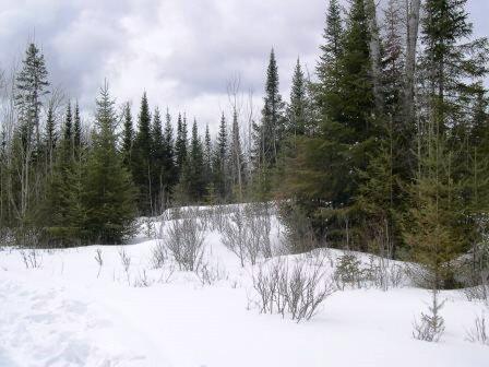 Gunflint Trail, Grand Marais, MN 55604 Photo 17