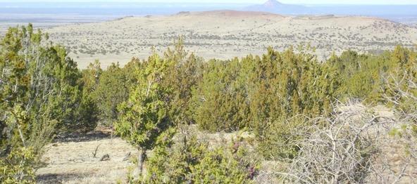 10922 S. High Mesa Trail, Williams, AZ 86046 Photo 29