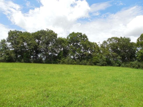 5 Acres Hwy. 103, Slocomb, AL 36375 Photo 11