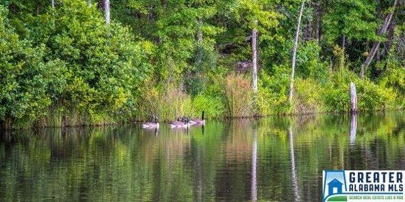 1771 Co Rd. 39, Sylacauga, AL 35151 Photo 14