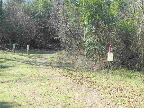 16.9 Acres Private Rd. 1363, Ariton, AL 36311 Photo 18