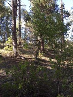Home for sale: Lot 130 Hunter Creek Dr., Payson, AZ 85541